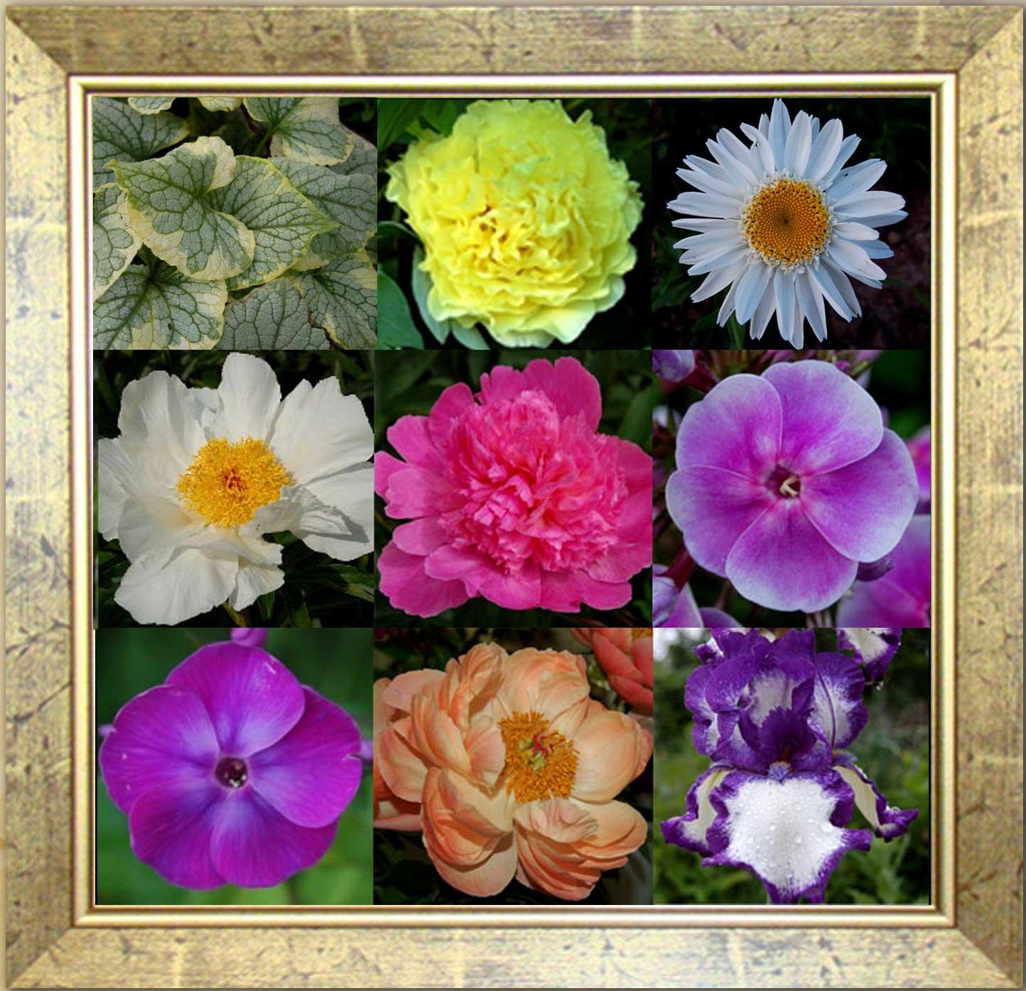 Добро пожаловать на сайт сада пионы и